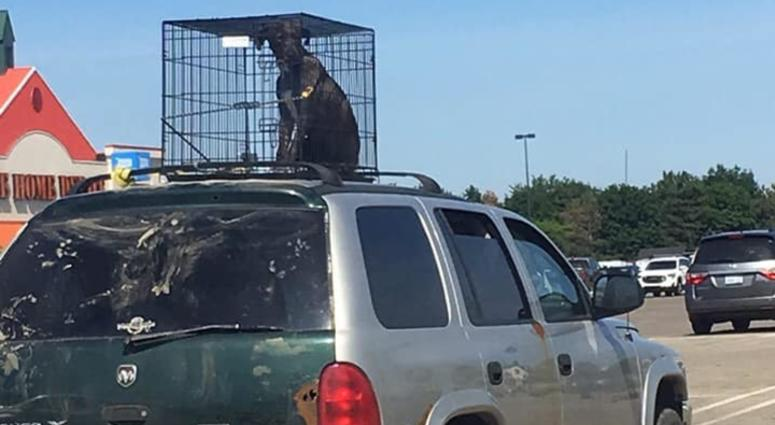 Dog On Car Roof | Travel With Doggie