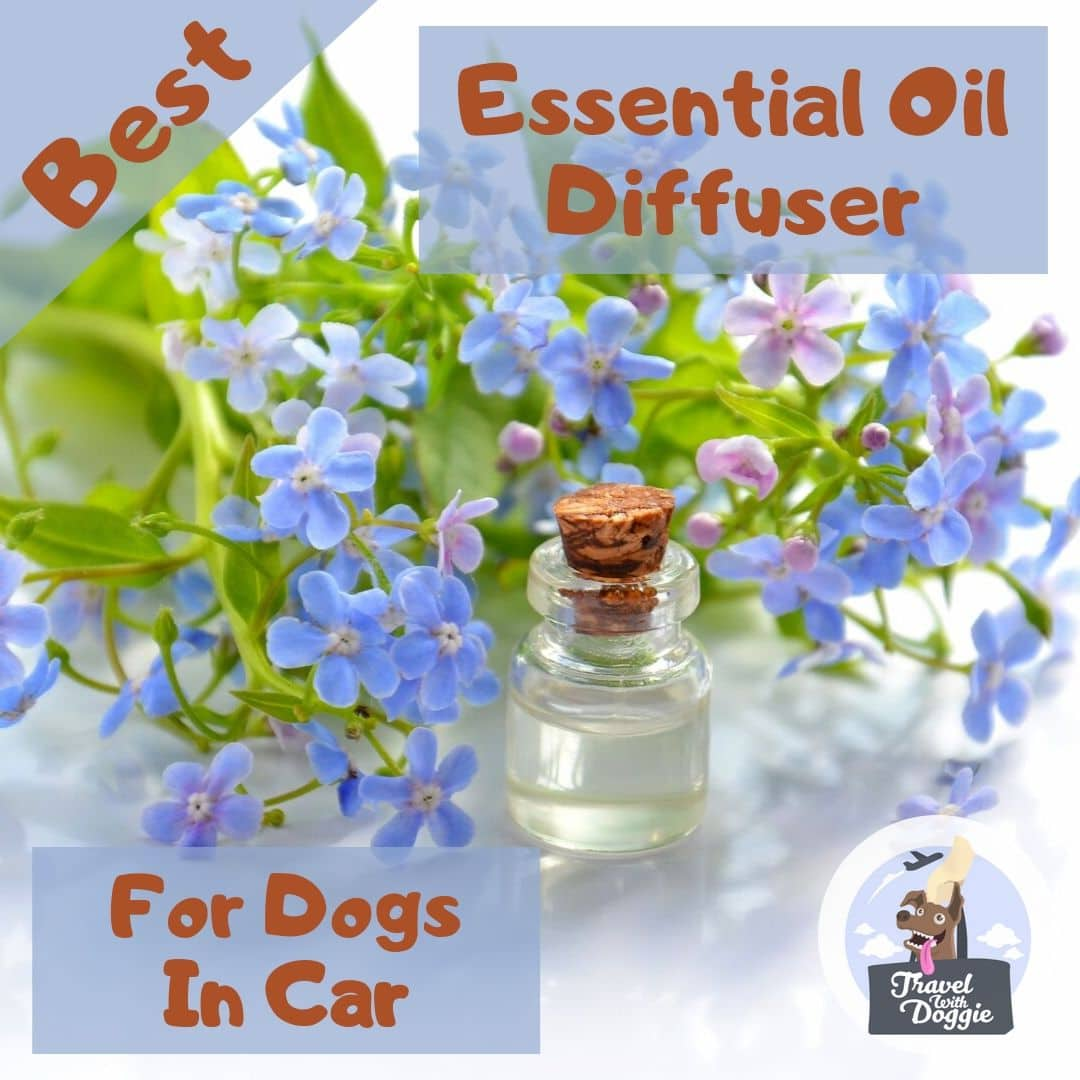 Best Essential Oil Diffuser For Dogs In Car | Travel With Doggie