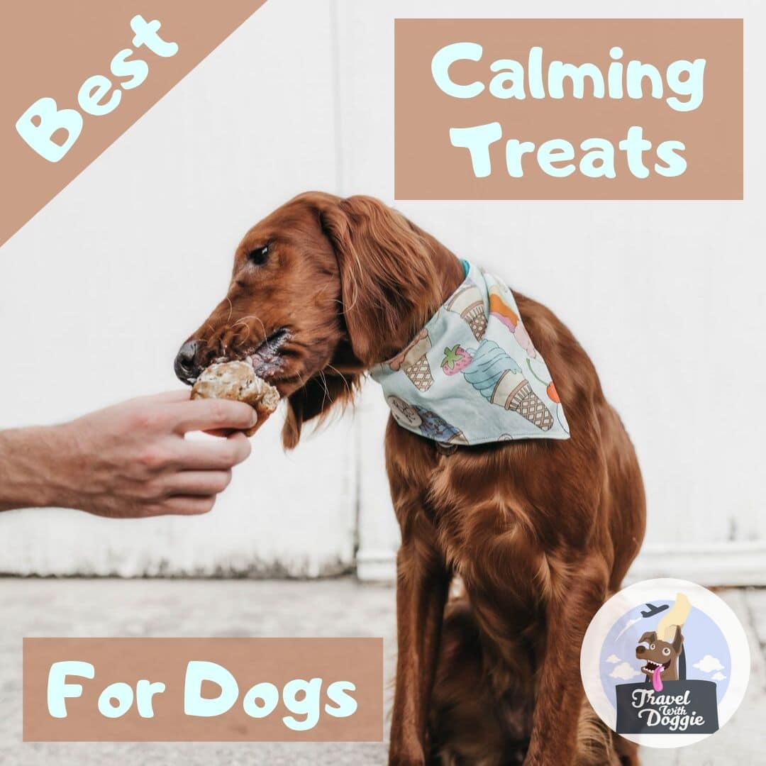 Best Calming Treats For Dogs | Travel With Doggie