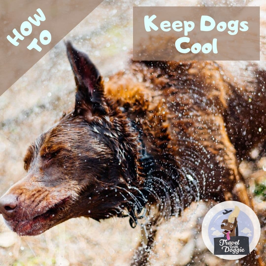How To Keep Dogs Cool | Travel With Doggie