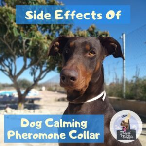 Side Effects Of Dog Calming Pheromone Collar | Travel With Doggie