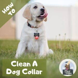 How to Clean A Dog Collar | Travel With Doggie