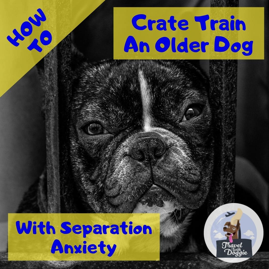 How To Crate Train An Older Dog With Separation Anxiety | Travel With Doggie