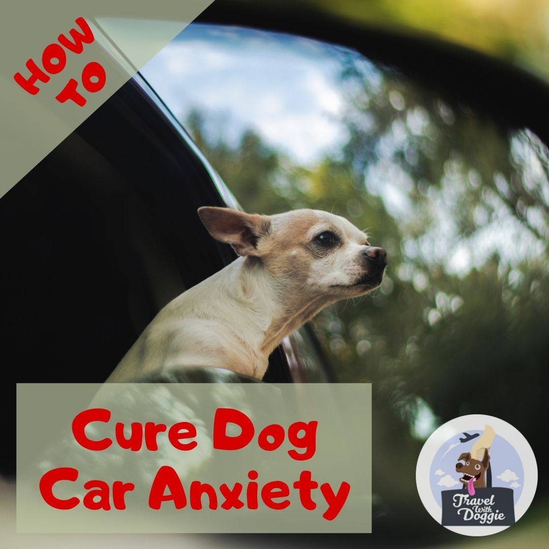 How To Cure Dog Car Anxiety | Travel With Doggie