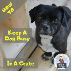 How To Keep A Dog Busy In A Crate | Travel With Doggie