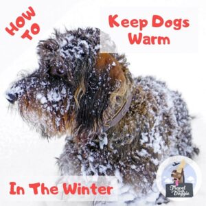 How To Keep Dogs Warm In Winter | Travel With Doggie