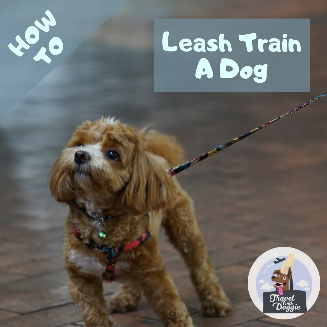 How To Leach Train A Dog | Travel With Doggie
