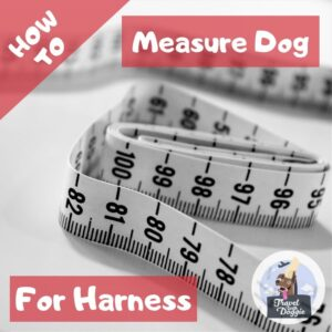 How To Measure A Dog For A Harness | Travel With Doggie