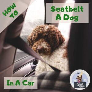 How To Seatbelt A Dog In A Car | Travel With Doggie