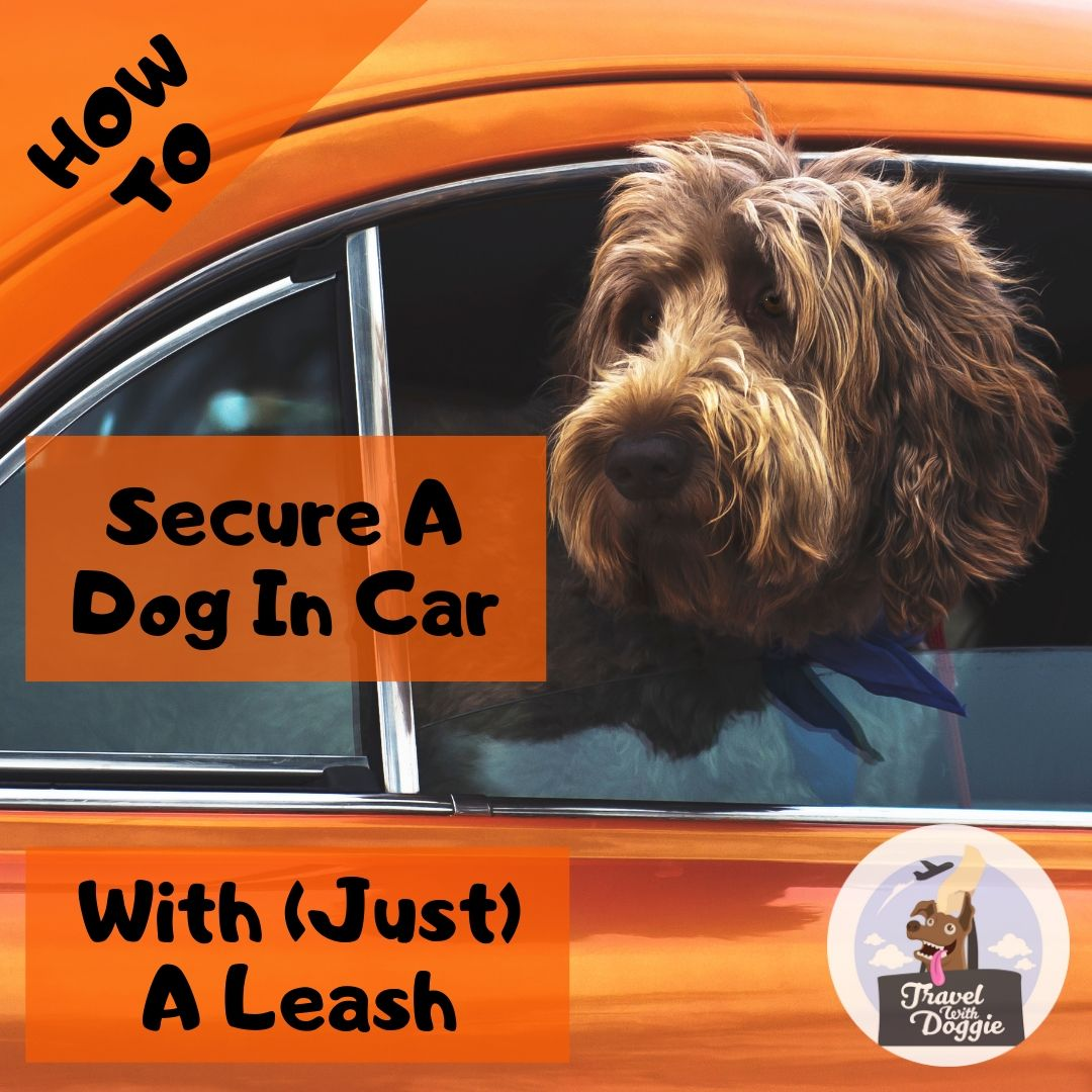 How To Secure Dog In Car With Leash | Travel With Doggie