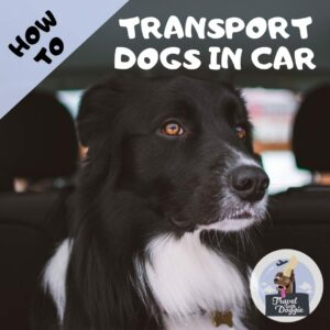 How to Transport Dogs in Car | Travel With Doggie