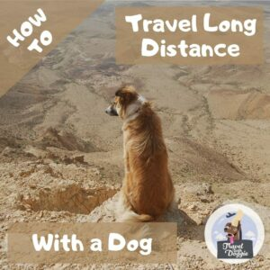How to Travel Long Distance With a Dog | Travel With Doggie