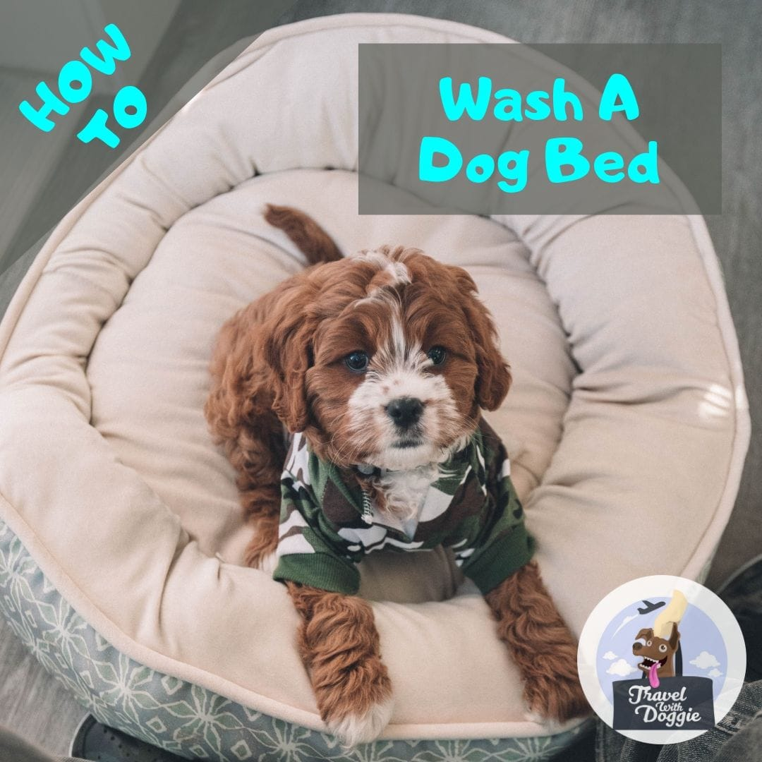 How To Wash A Dog Bed | Travel with Doggie