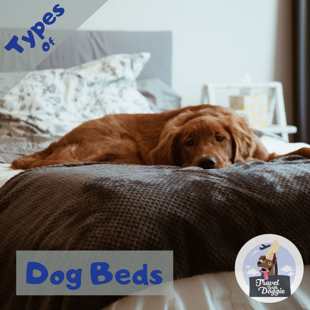 Types Of Dog Beds | Travel With Doggie
