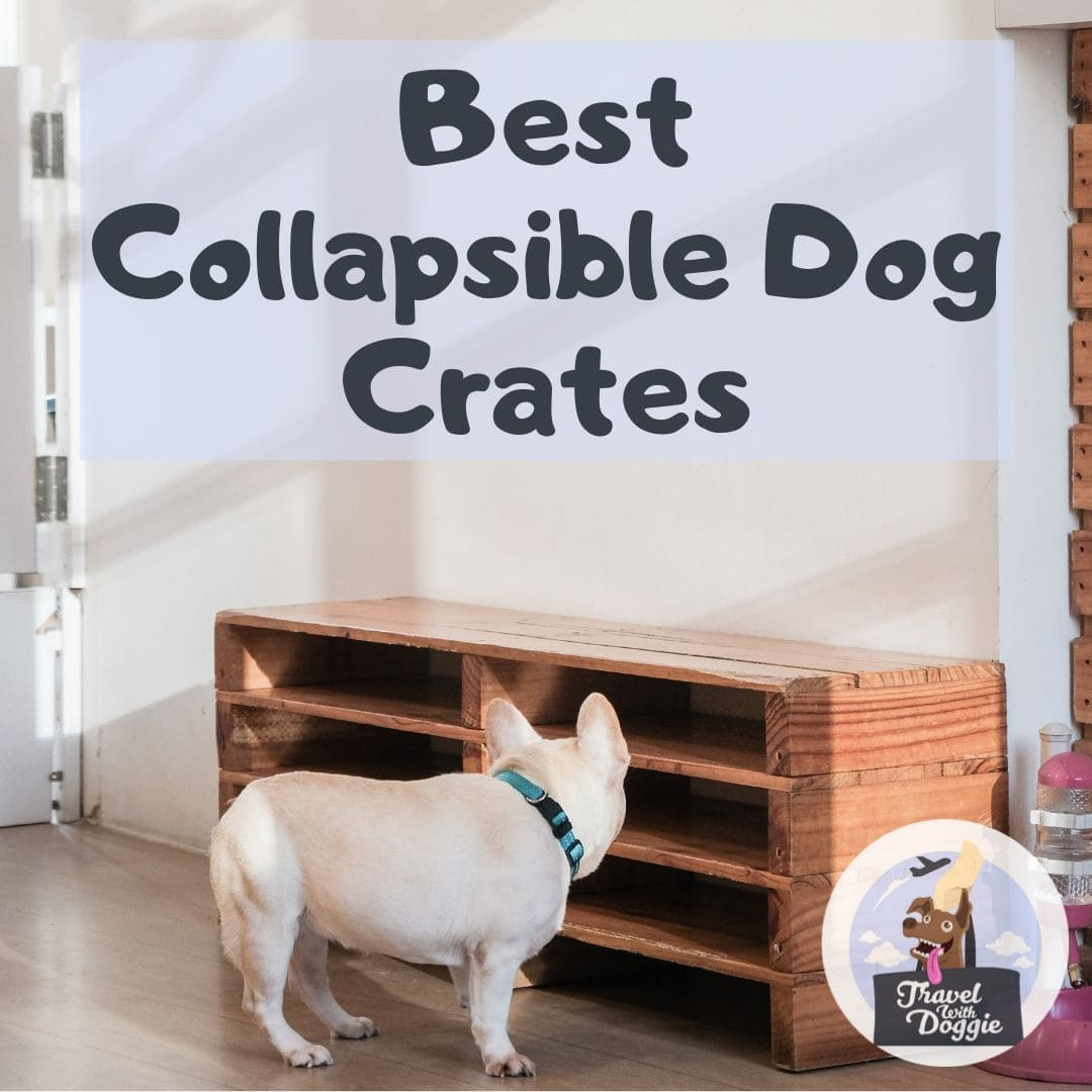 Best Collapsible Dog Crates | Travel With Doggie