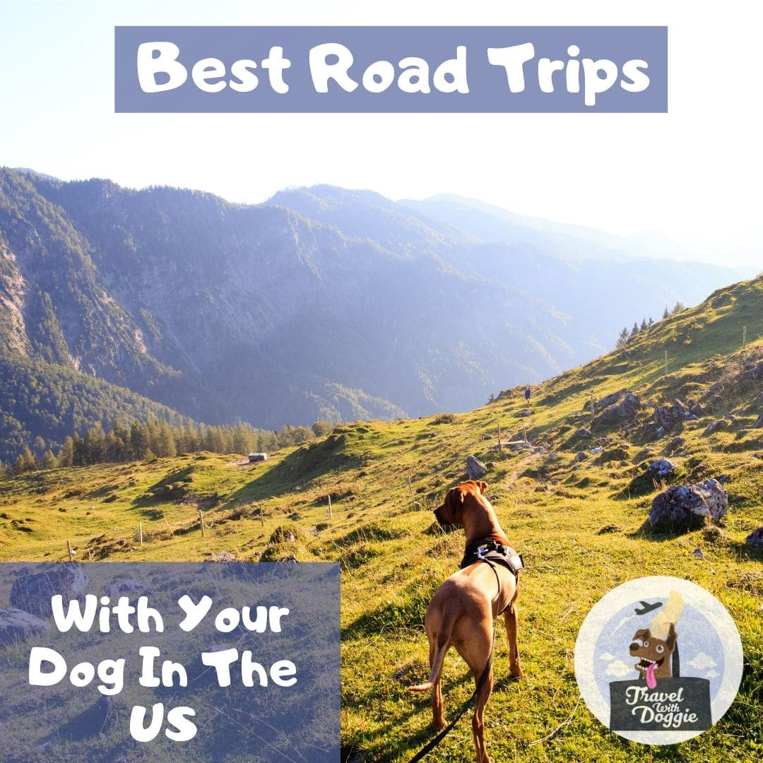 Best Road Trips With Your Dog Around The US | Travel With Doggie