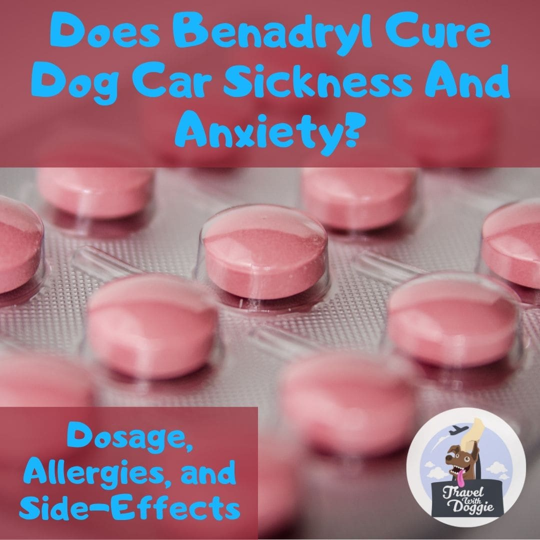 Does Benadryl Cure Dog Car Sickness and Anxiety? Dosage, Allergies and Side-Effects | The