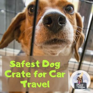 Best Crash Tested Dog Car Seats | Travel With Doggie