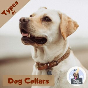 Types Of Dog Collars | Travel With Doggie