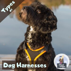 Types of Dog Harnesses | Travel With Doggie