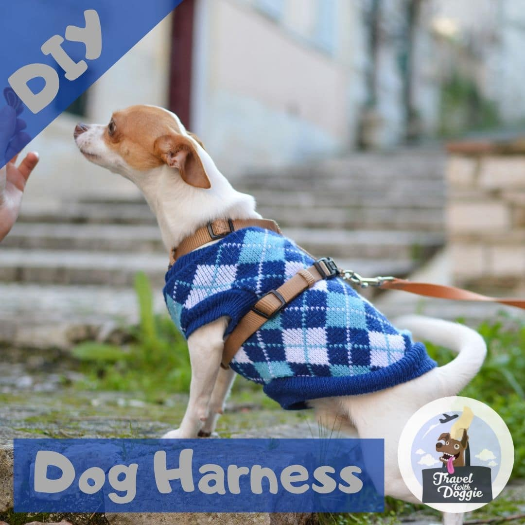 DIY Dog Harness | Travel With Doggie