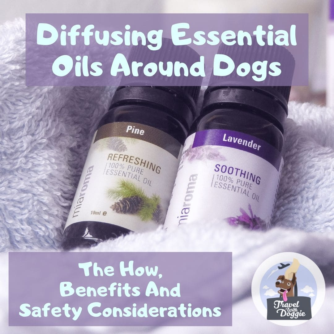 Diffusing Essential Oils Around Dogs | Travel With Doggie
