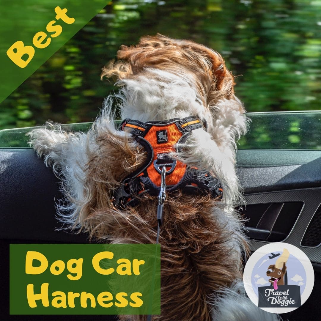 Best Dog Car Harness | Travel With Doggie