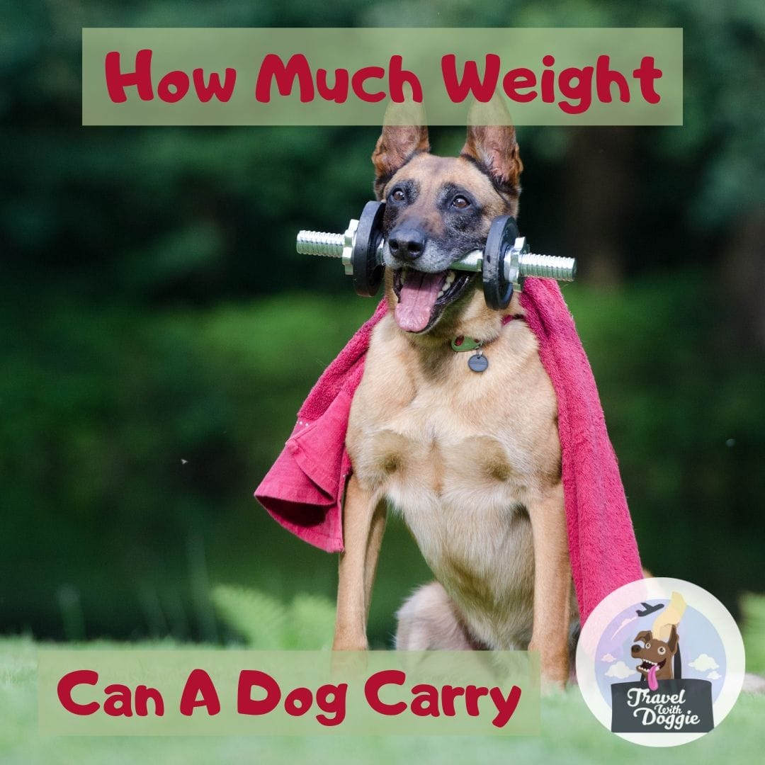 How Much Weight Can A Dog Carry | Travel With Doggie