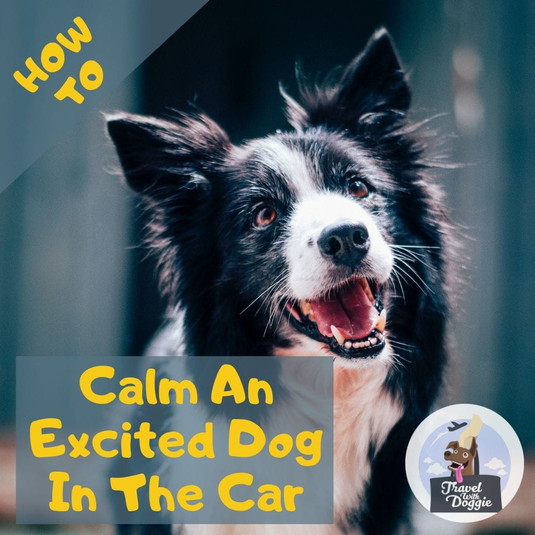 How To Calm An Excited Dog In The Car | Travel With Doggie