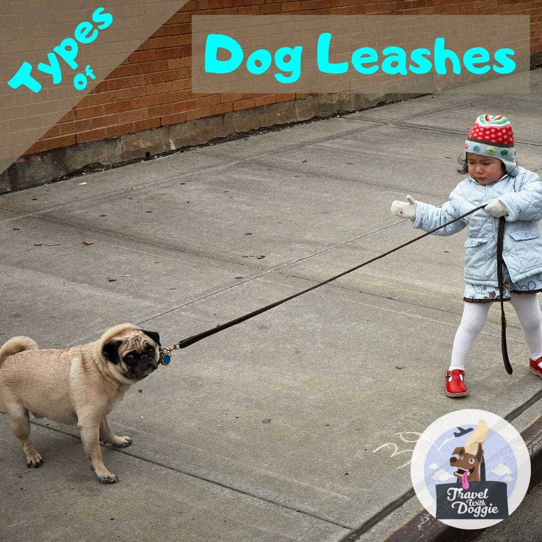 Types of Dog Leashes | Travel With Doggie