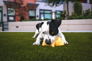 dog with plush toy | Travel with Doggie