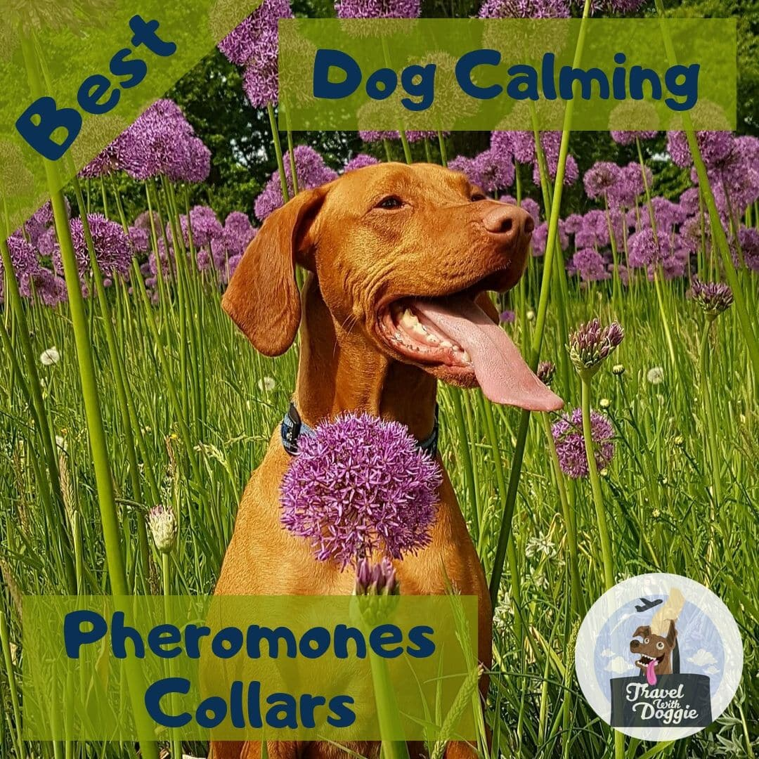 Best Dog Calming Pheromones Collars | Travel With Doggie