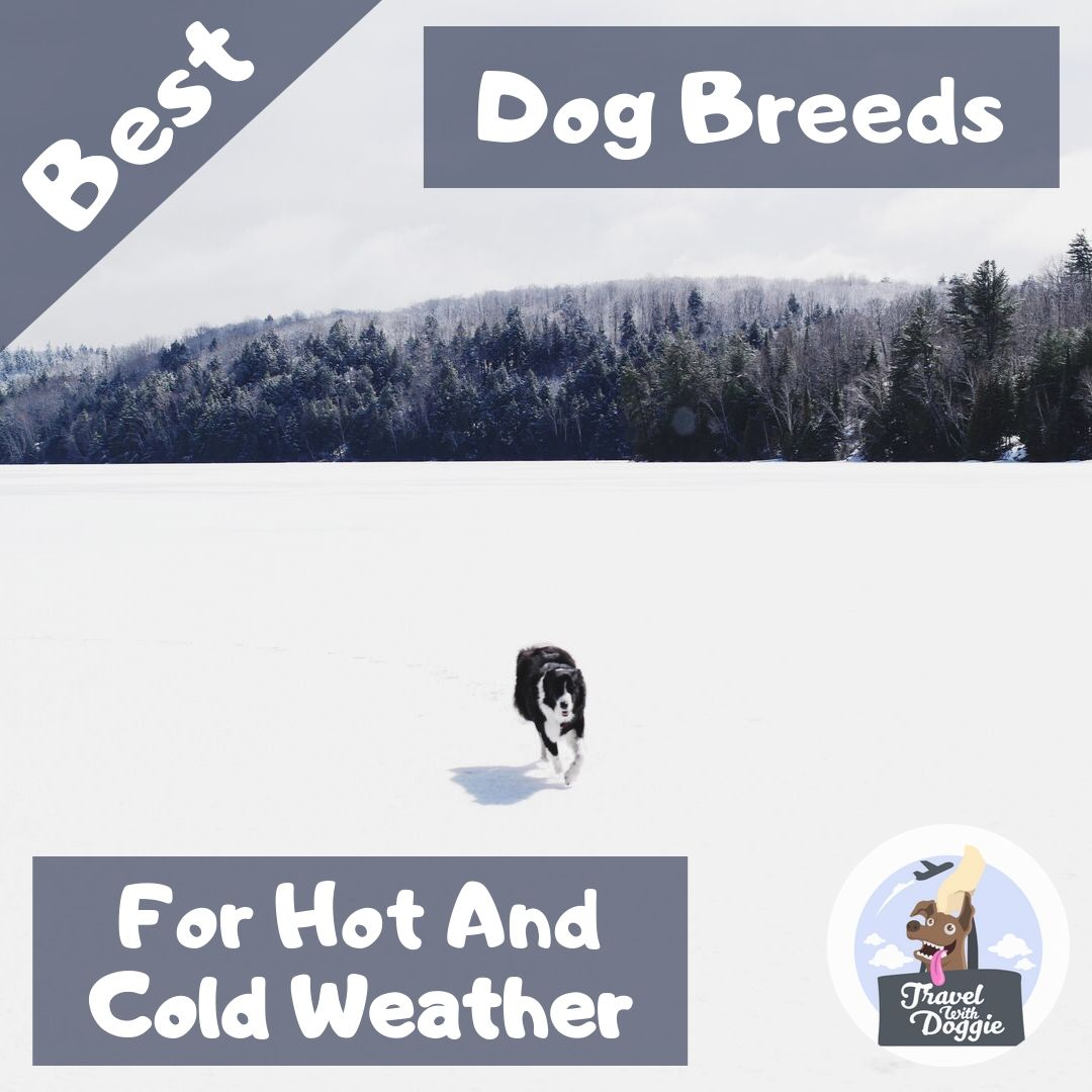 Best Dog Breeds For Hot And Cold Weather | Travel With Doggie