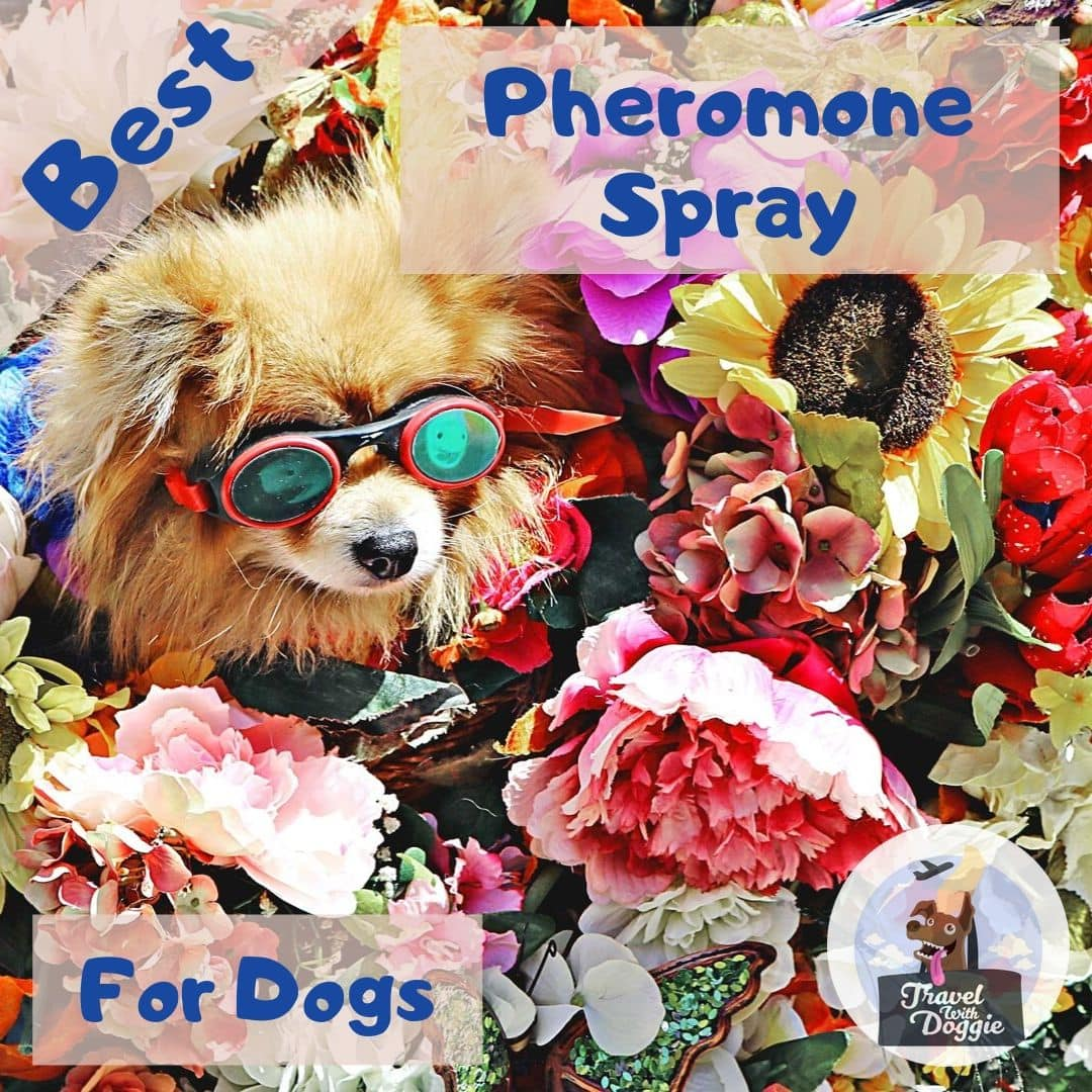 Best Pheromone Spray For Dogs | Travel With Doggie