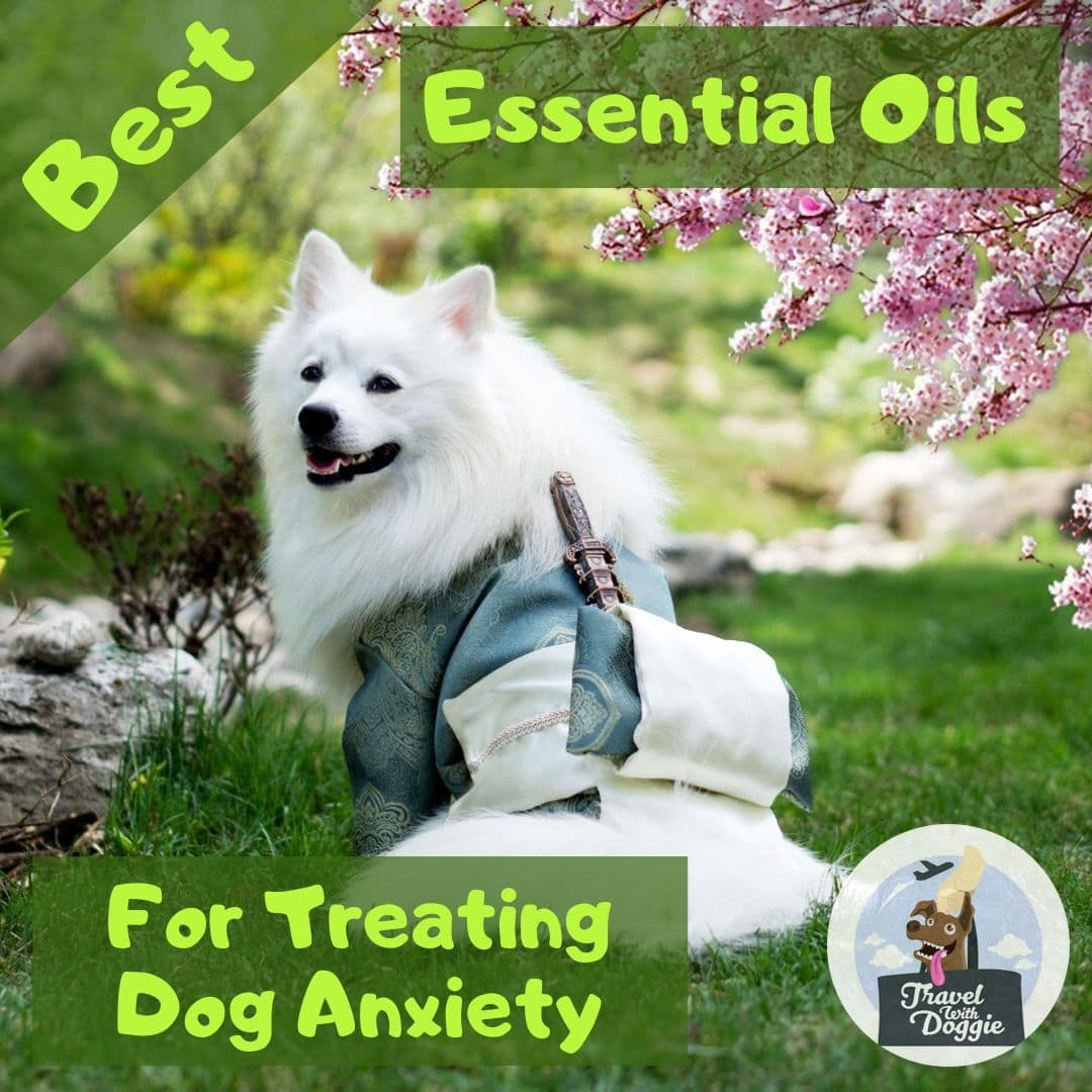 Essential Oils For Dog Anxiety | Travel With Doggie