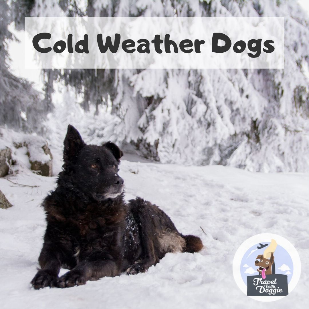Cold Weather Dogs | Travel With Doggie