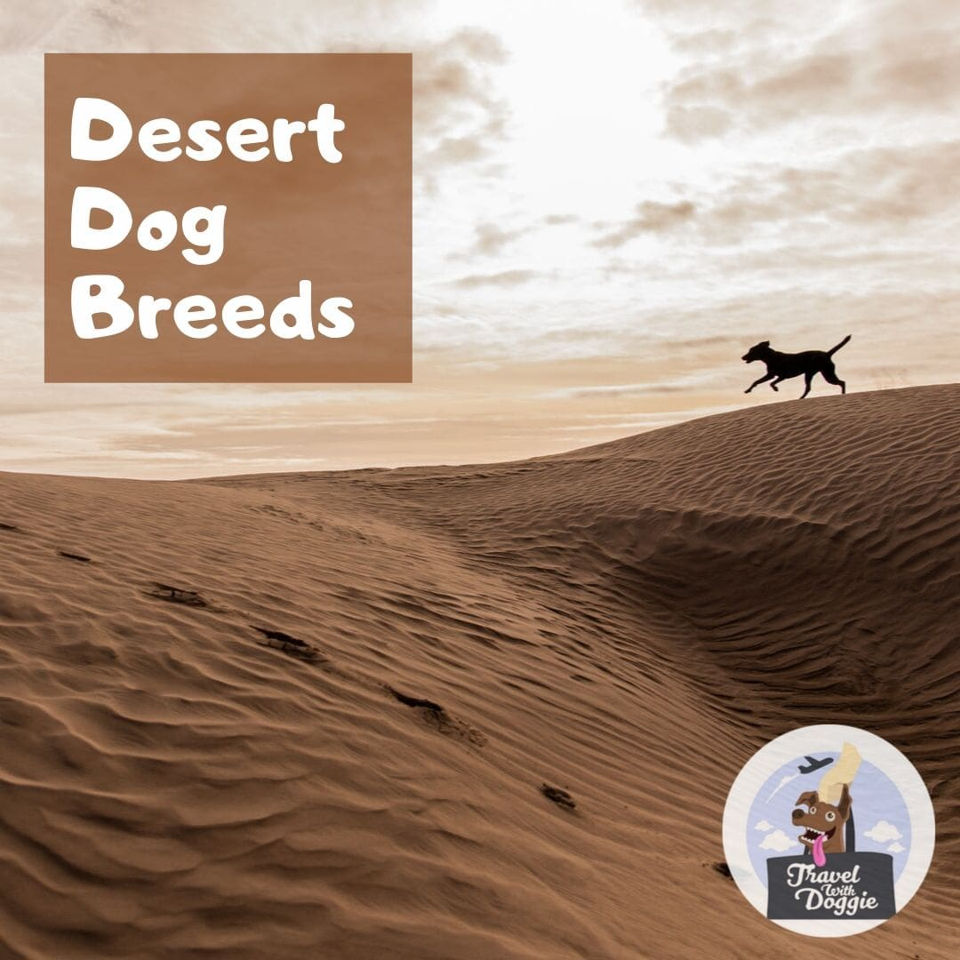 Desert Dog Breed | Travel With Doggie