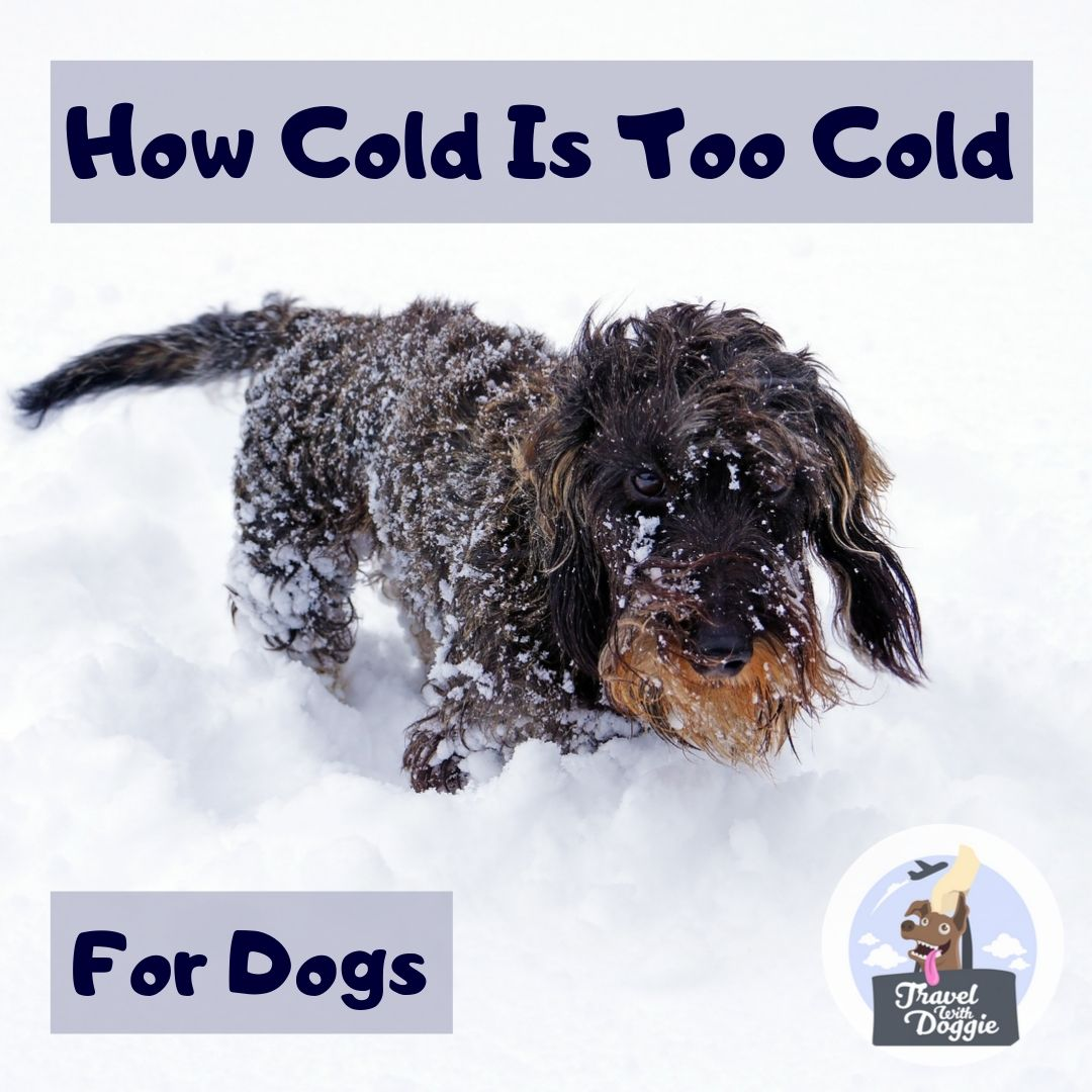 How Cold Is Too Cold for Dogs | Travel With Doggie
