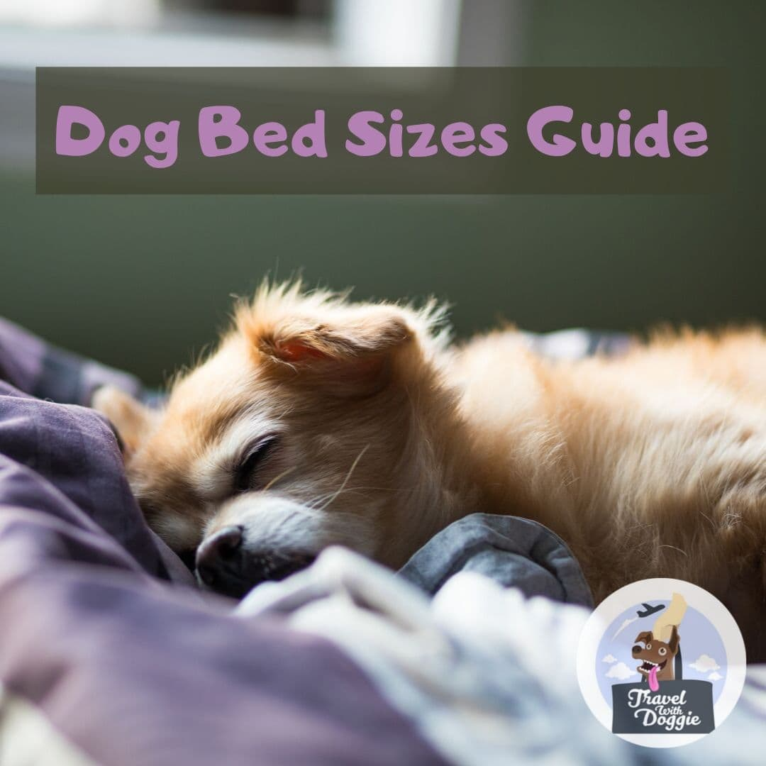 Dog Bed Sizes Guide | Travel With Doggie
