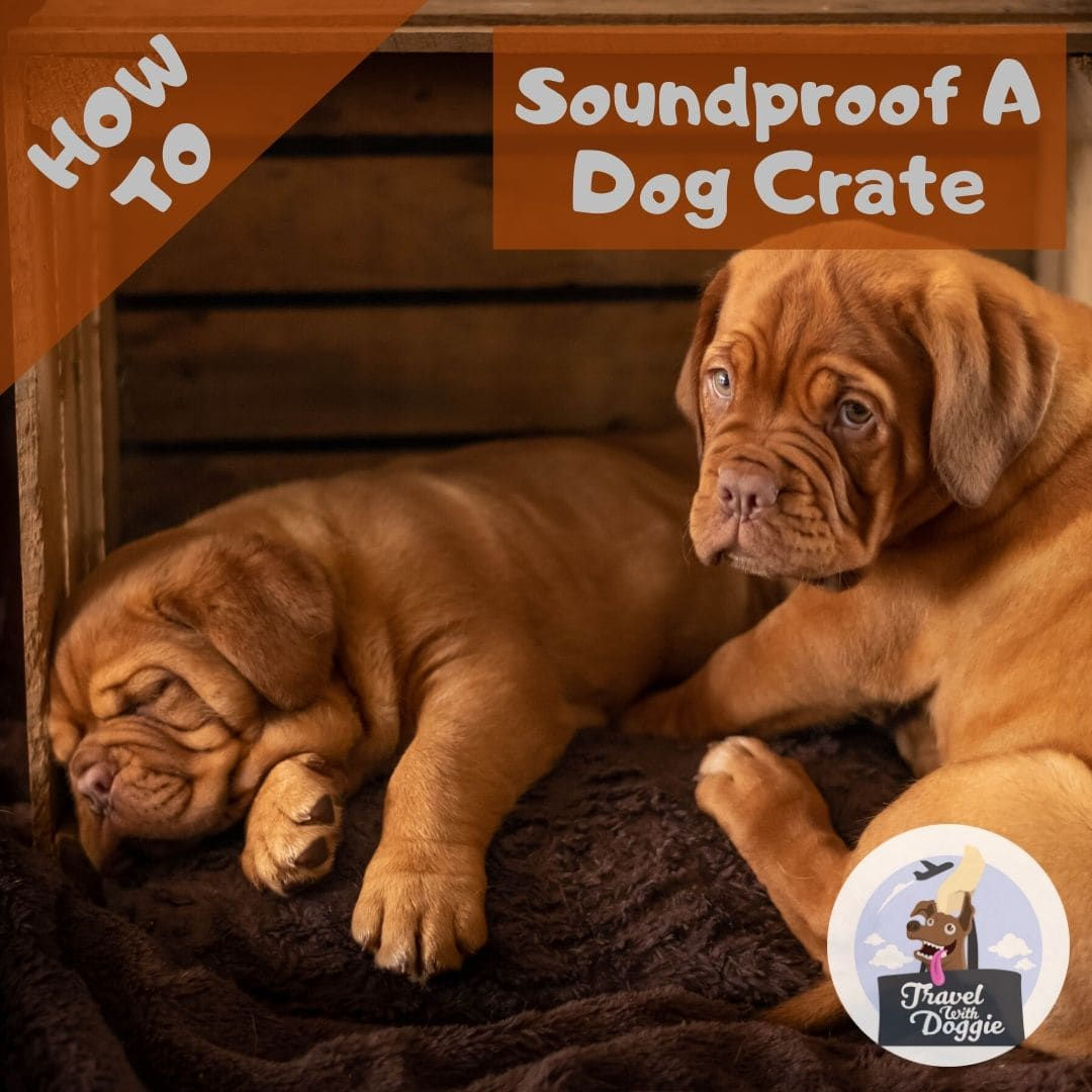 How To Soundproof A Dog Crate | Travel With Doggie