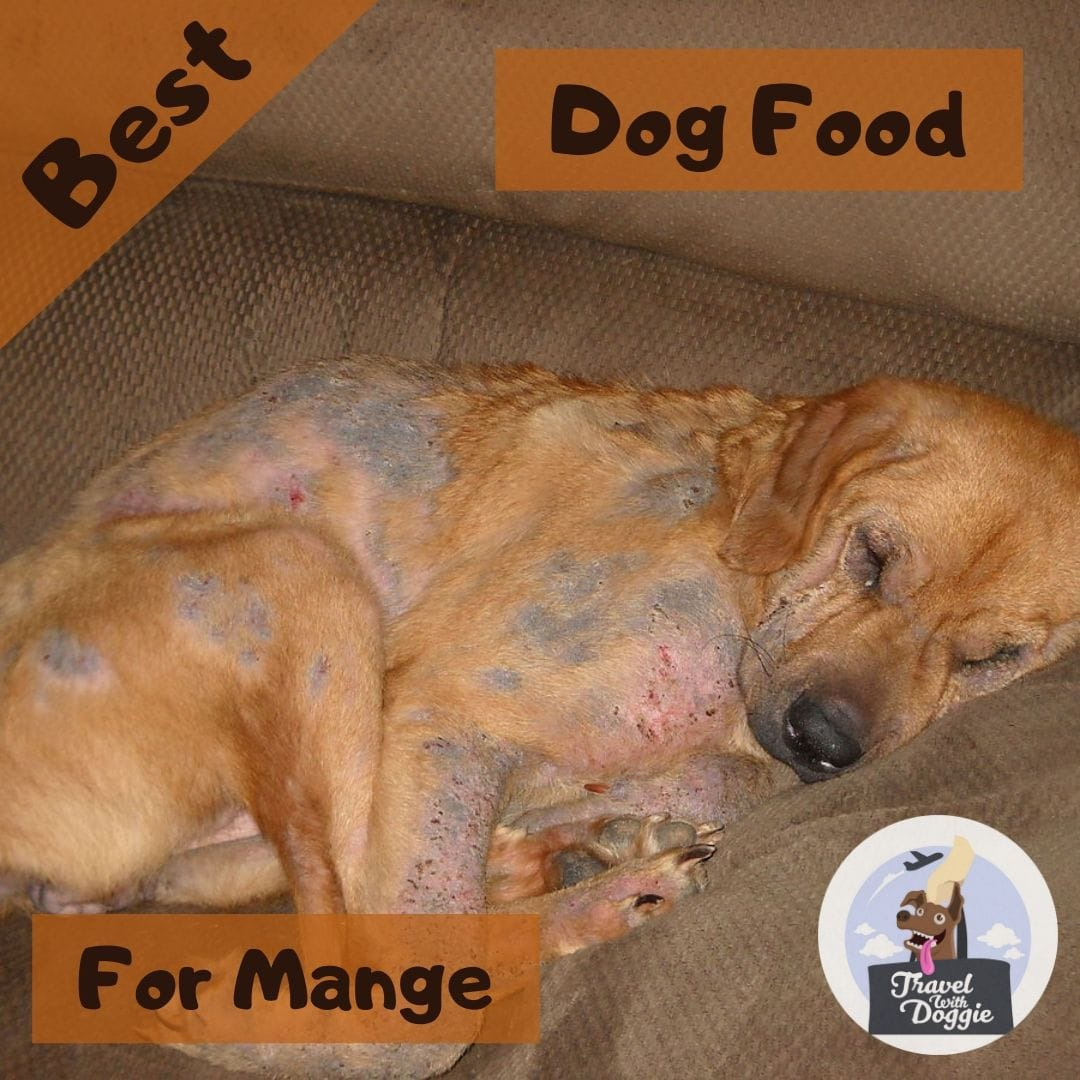 Best Dog food For Mange | Travel With Doggie