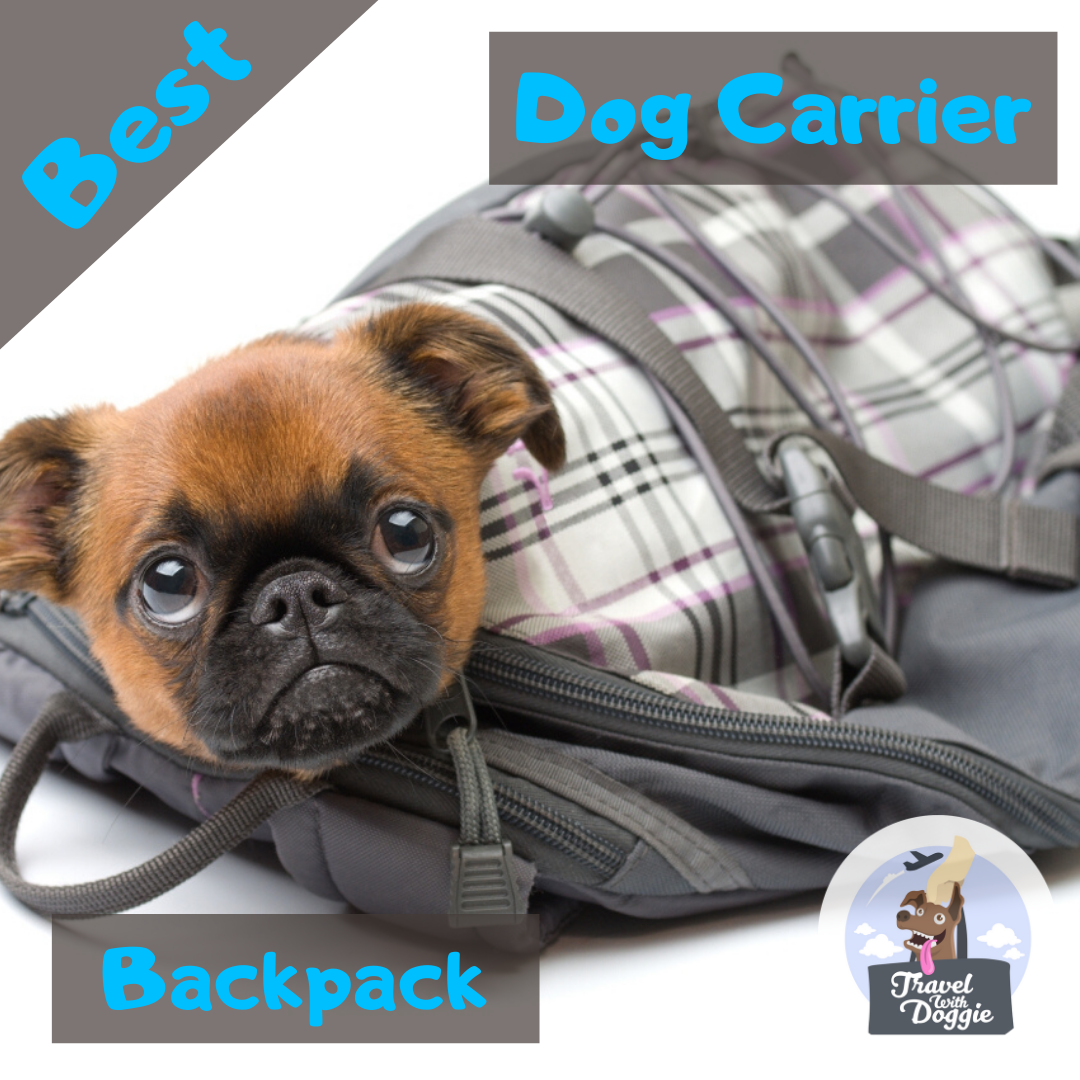 11 Best Dog Carrier Backpacks