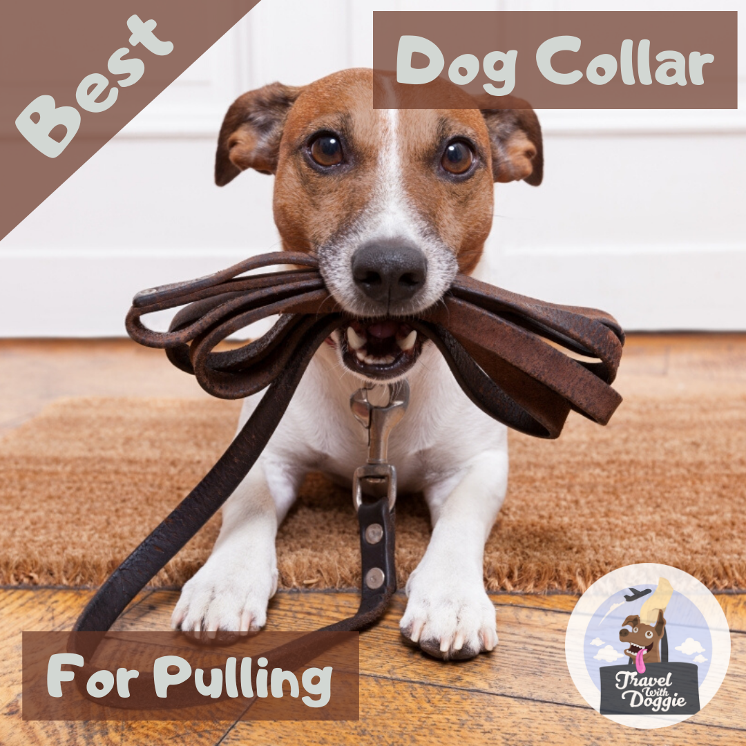 Best Dog Collar for Pulling