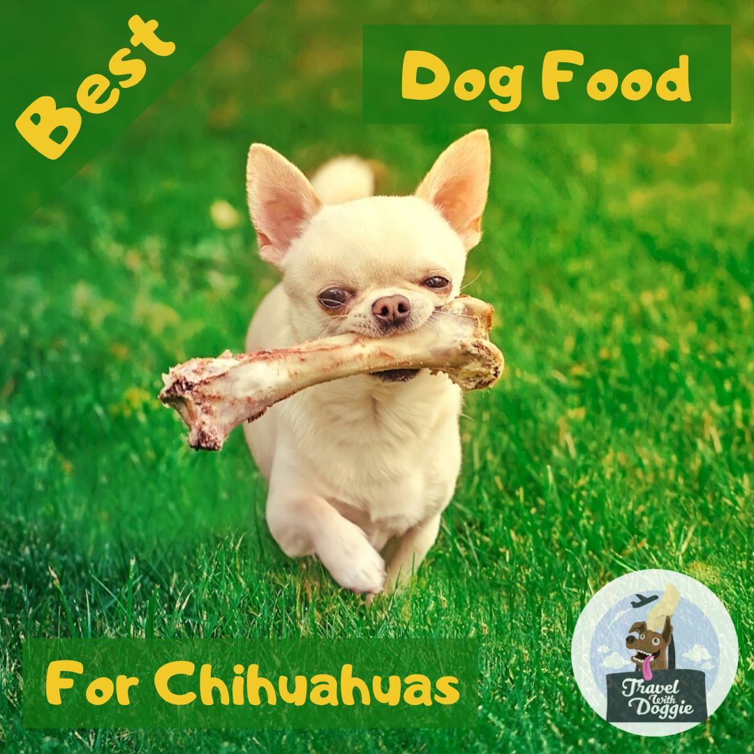 8 Best Dog Food For Chihuahuas